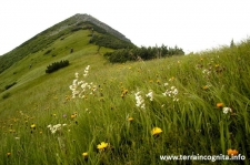 Beautiful Carpathians
